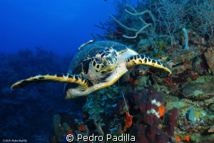 Sea turtle playing with us! 